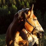 Dalton Schulist Profile Picture
